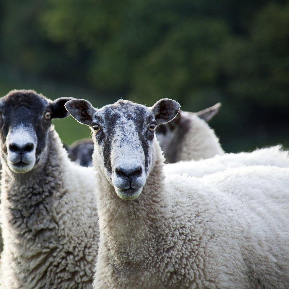 Farm Livestock & Produce