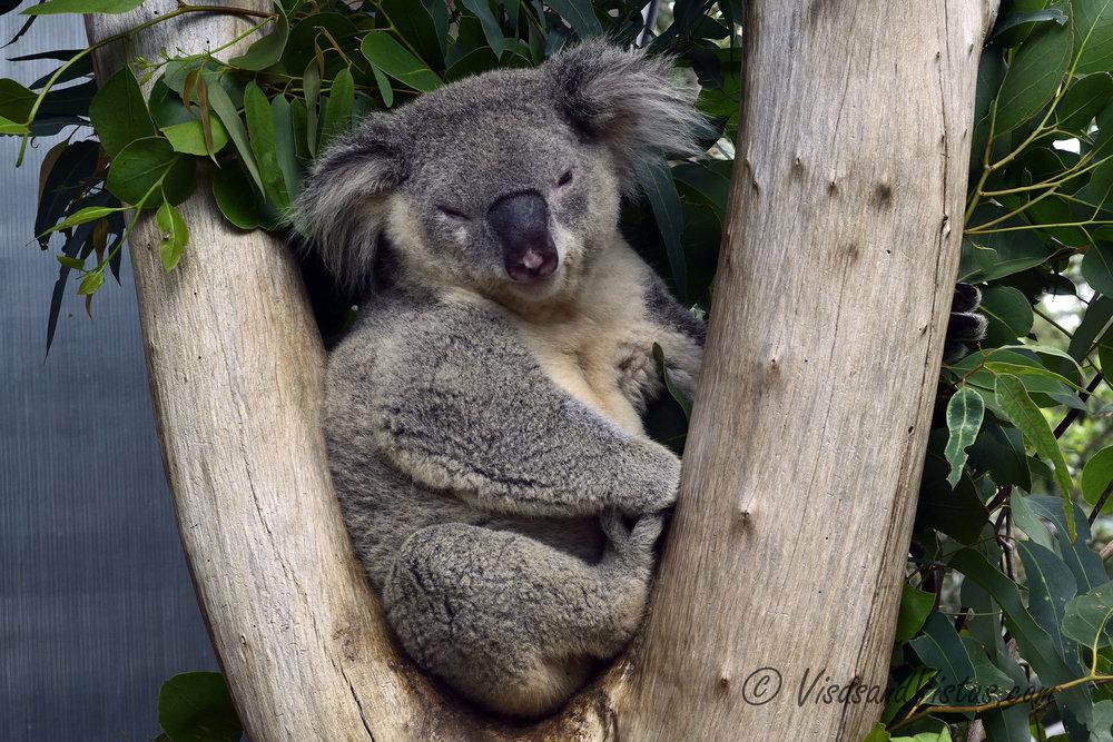 Australia 139.jpg