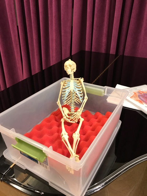 Mr Bones taking in the Alexander Technique class.jpeg
