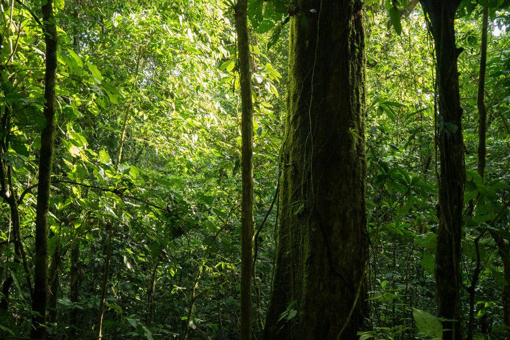 Bosque de río Mercedes