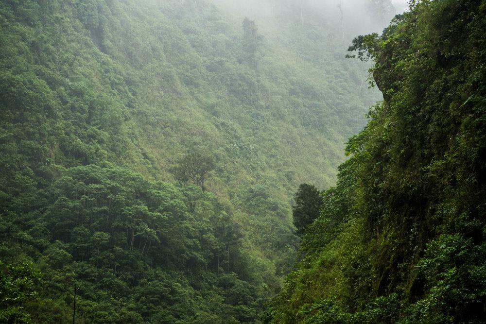 Vegetación del cañón
