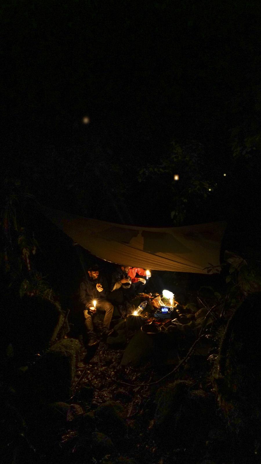 Campamento y luces de bosque