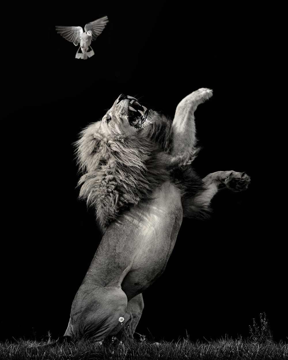 Simon+Needham+Humanitarian+Photography+Lions+of+Africa+13.jpg