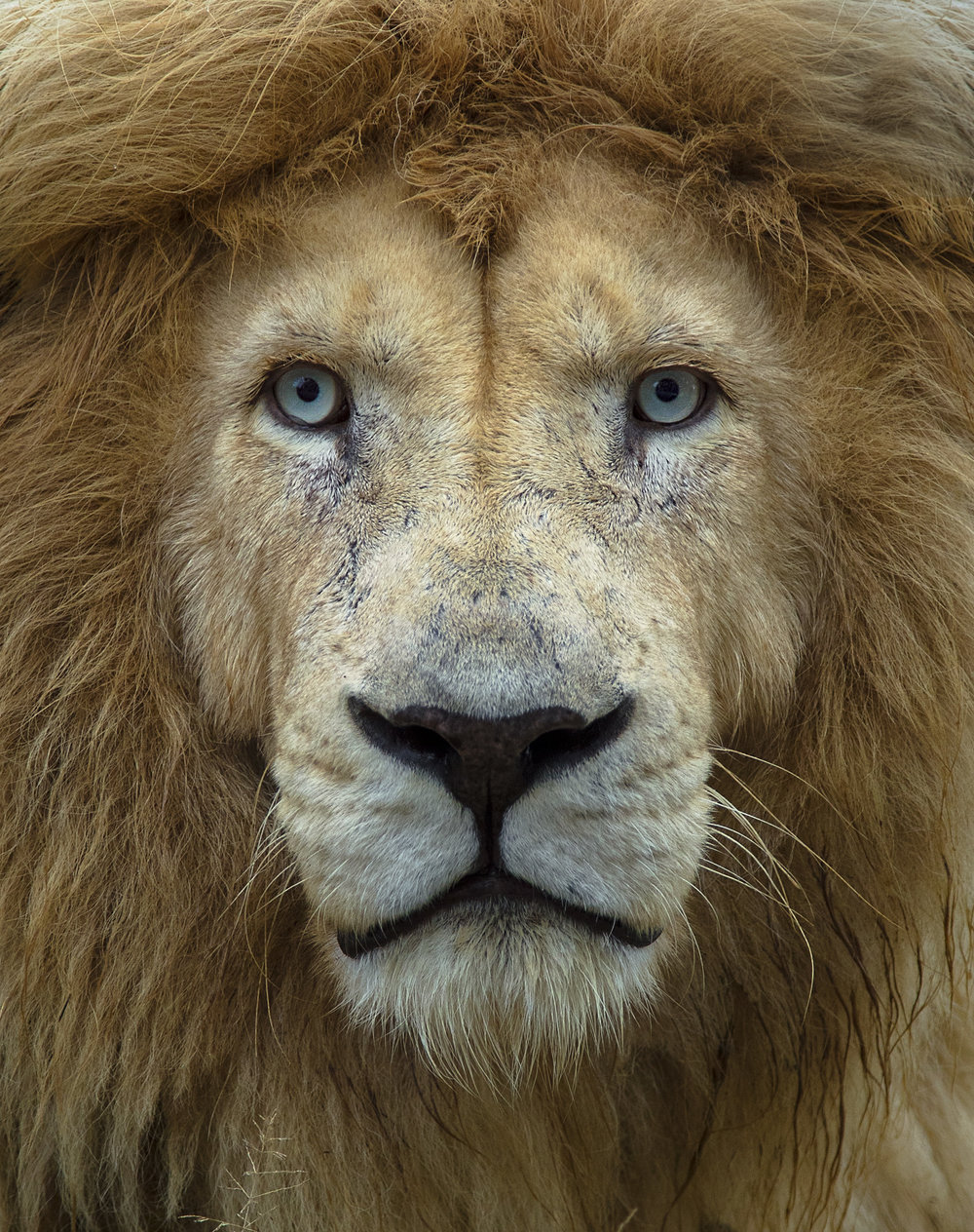 Simon+Needham+Humanitarian+Photography+Lions+of+Africa+19.jpg