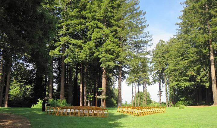 weddingchairs.jpg