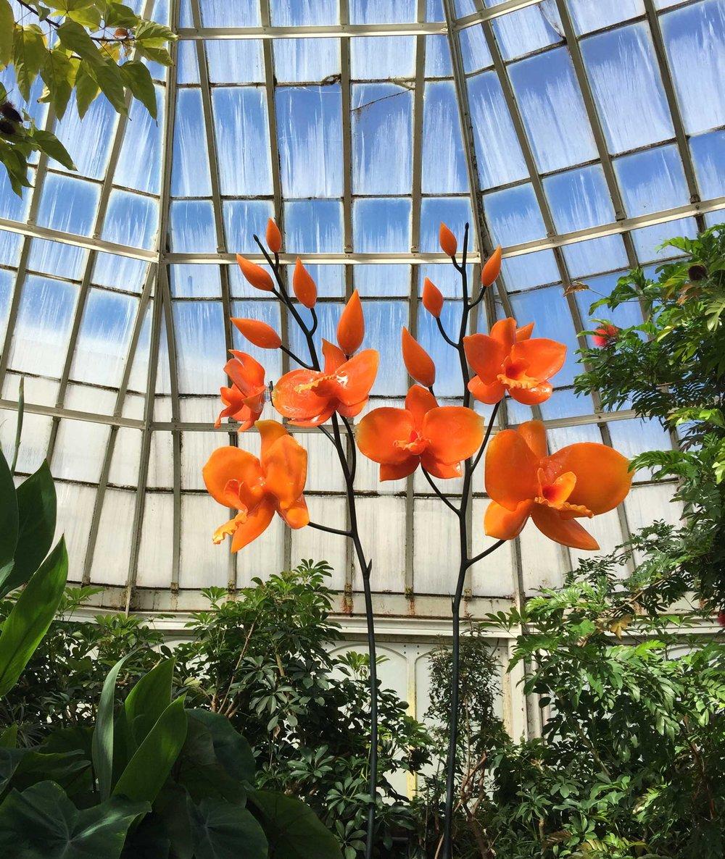 phipps-orange-tall.jpg