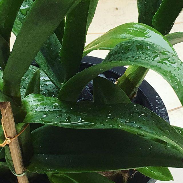 Al's orchids