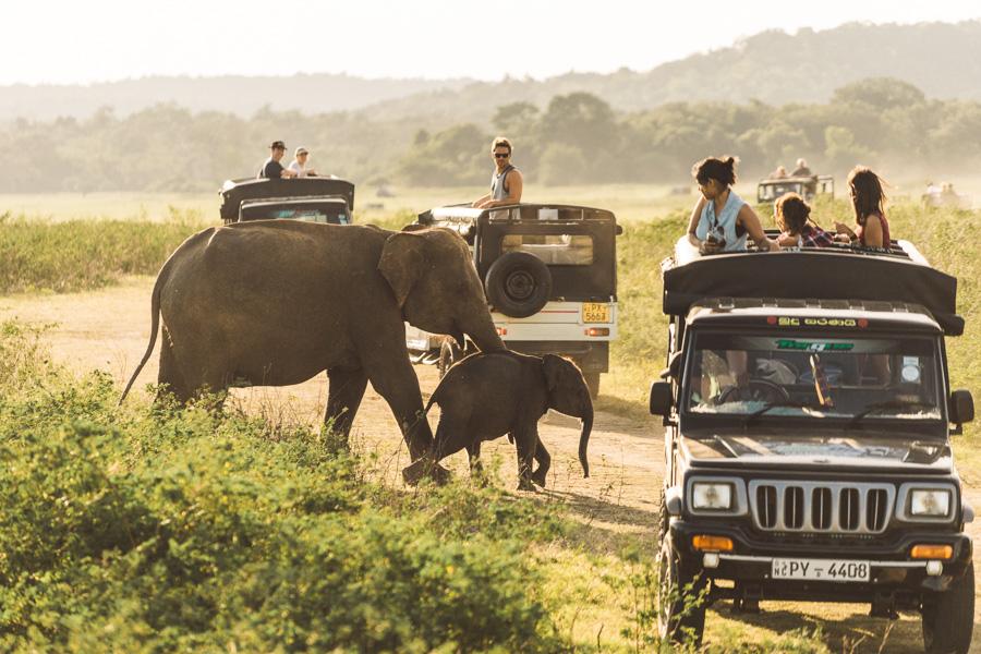sri-lanka-photos-8716.jpg
