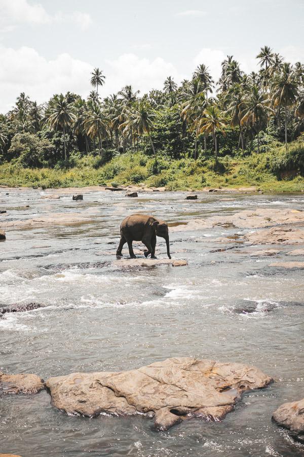sri-lanka-photos-8313.jpg