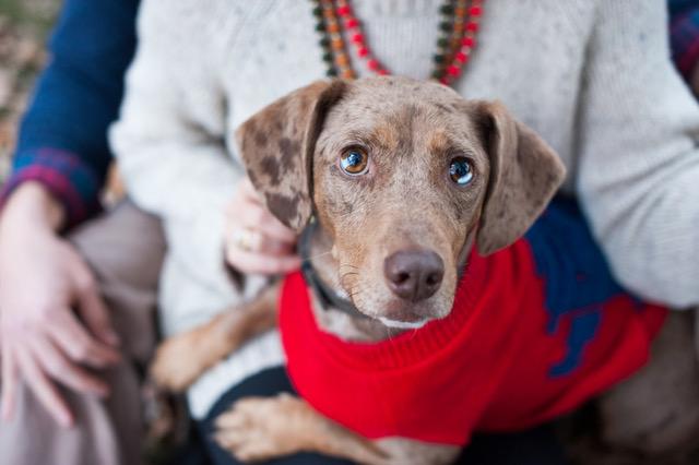 Winston Charlie, Emmy and Lee's beloved dog.