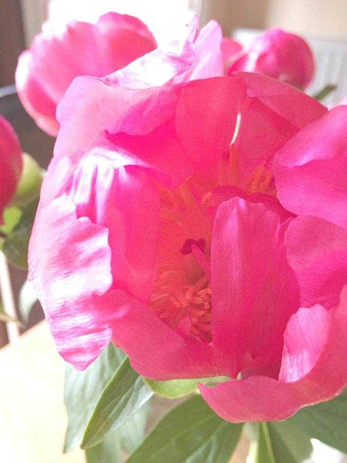 Jules and Louis Blog - Currently Working On - peony flower