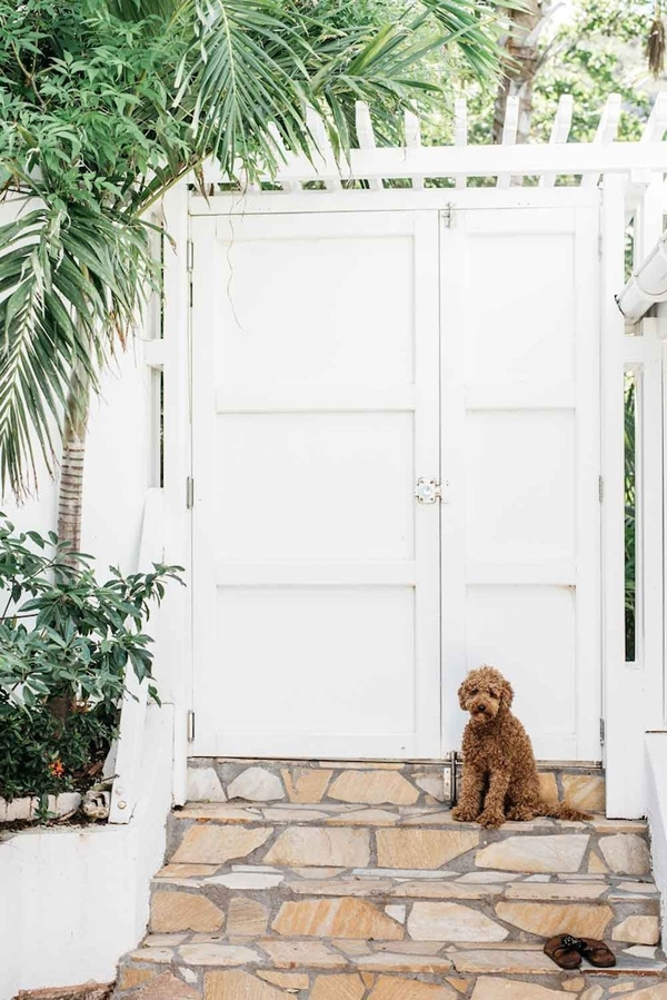 Jules and Louis Blog - Villa Palmier at St. Barth's - dog in front of gate