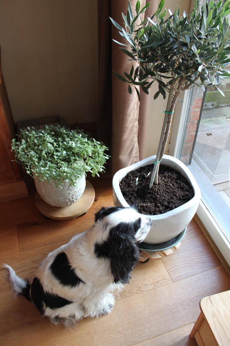 Jules and Louis blog - wat ik leerde van mijn hond - Lilly kijkend uit het raam.png