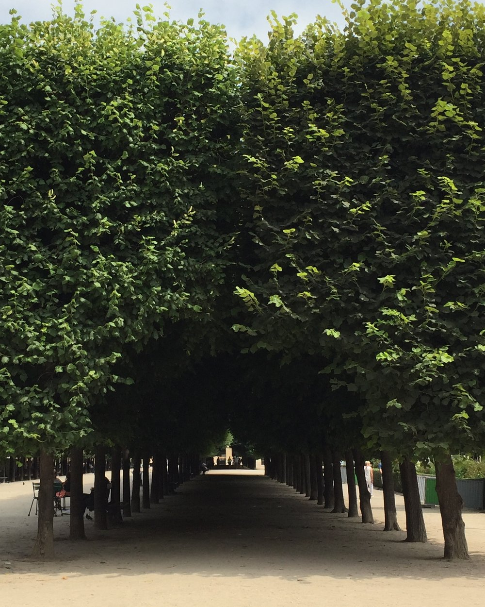 JARDIN DU PALAIS ROYAL, TREE ARCADE, PARIS