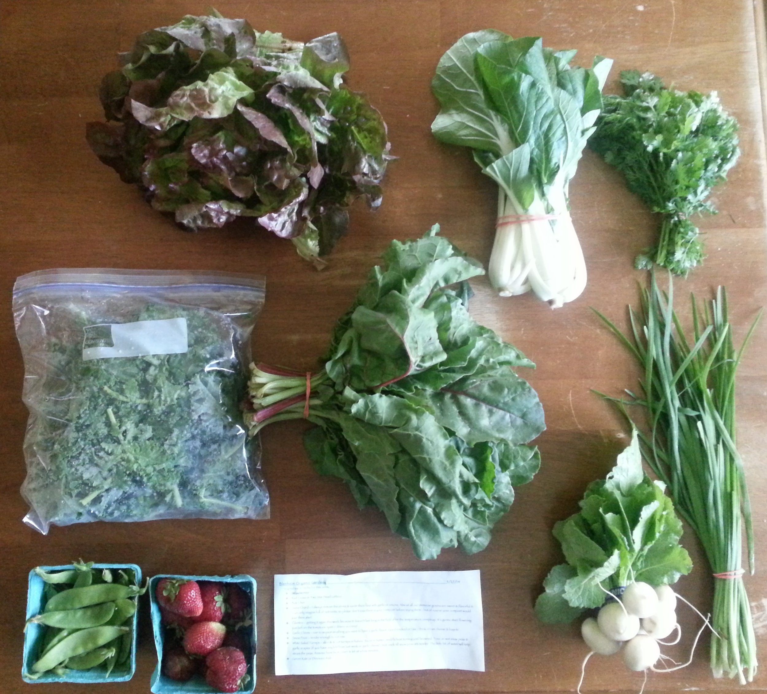 Summer CSA Haul Week 1