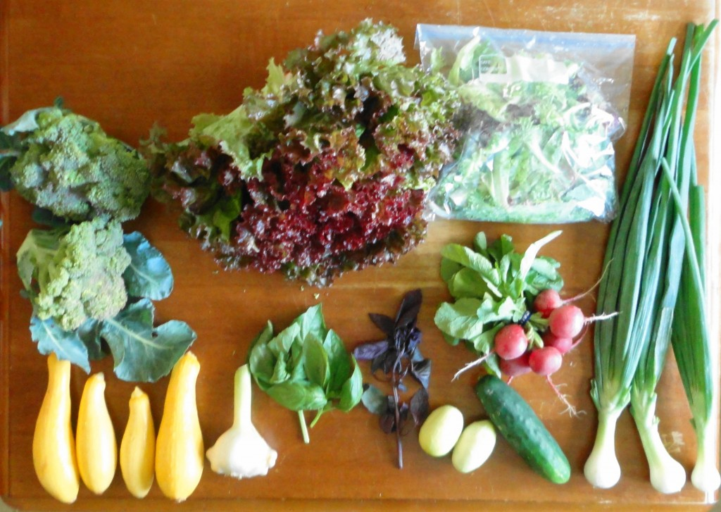 Summer CSA Haul Week 4