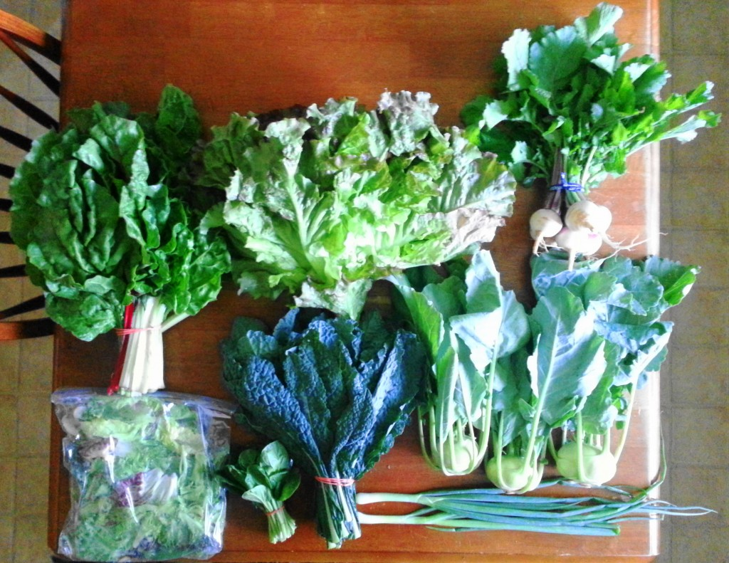 Summer CSA Haul Week 2