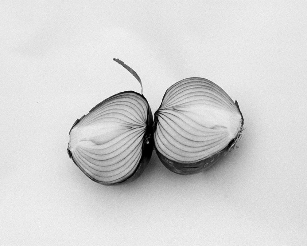 Split Onion , 2016, silver gelatin print, 16 x 20 inches