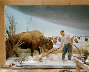 Richard Barnes,  Man With Buffalo (  2007)