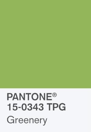 PANTONE-COY-2017-15-0343-Chip.jpg