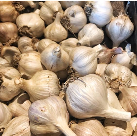 Russian Red Garlic.png