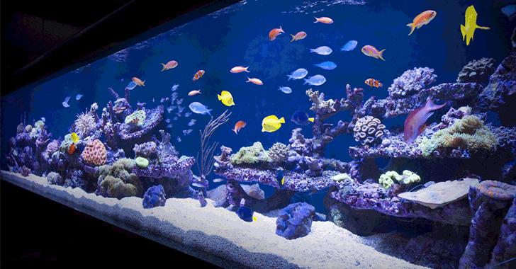 Casino hacked through fish tank
