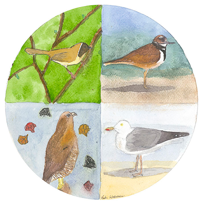"'4 Seasons of Birding"" - Watercolor - by Lucas Haberkorn"
