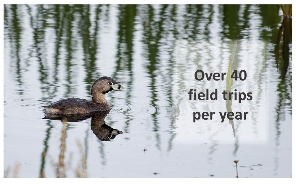 Grebe with text.jpg