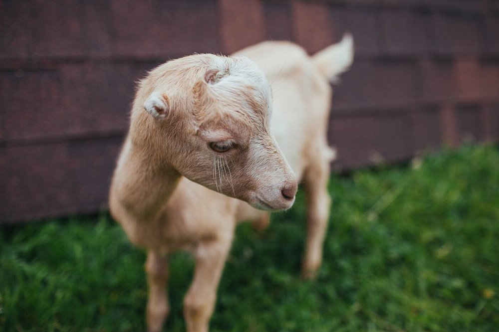 Upcoming Event: Goat Care Classes