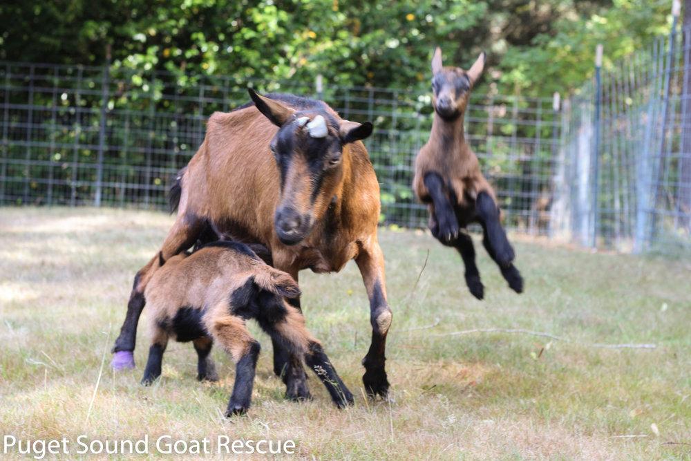 Renata & her boys Duke & Duncan