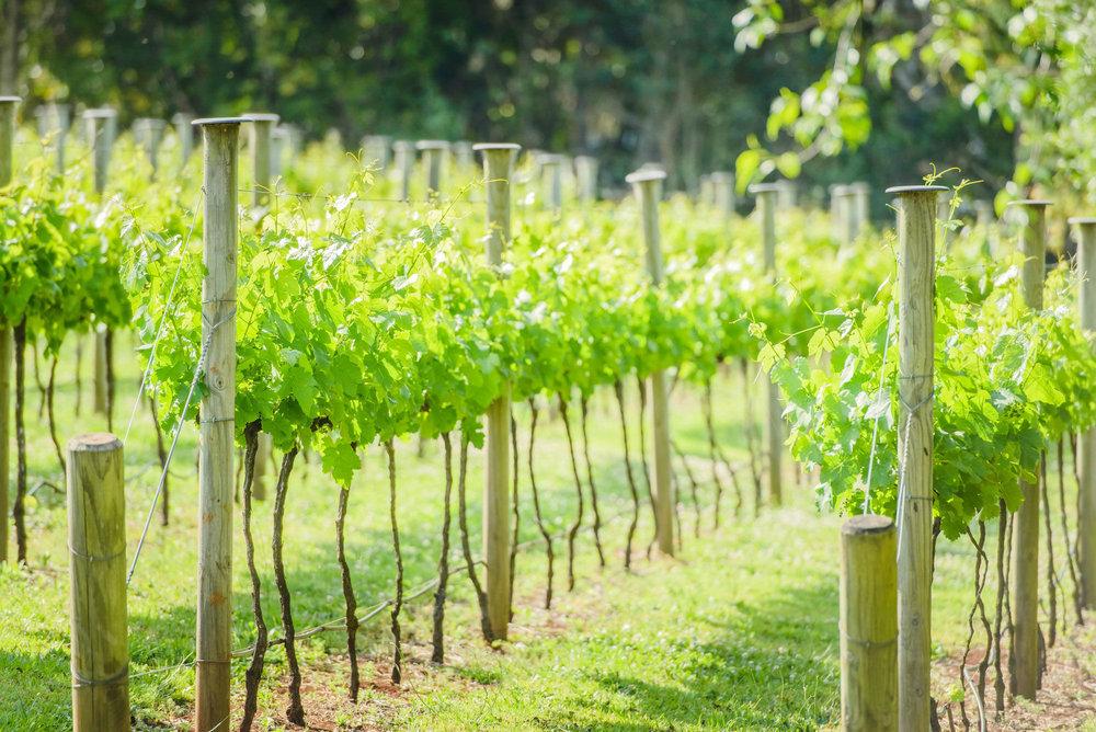 winery-tour-tamborine-mountain.jpg