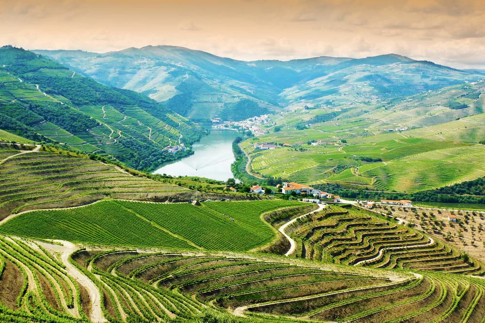 Port comes from the beautiful Douro Valley in Portugal.
