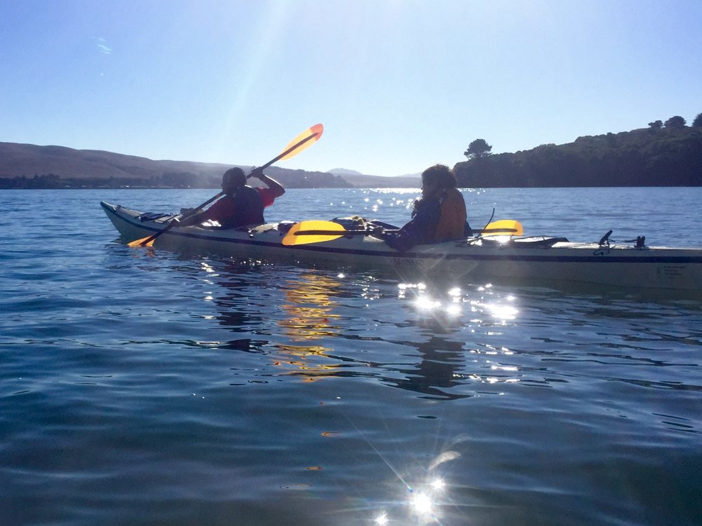 tomales bay kayaking