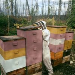 Our Hives Right Before Harvest Summer 2016