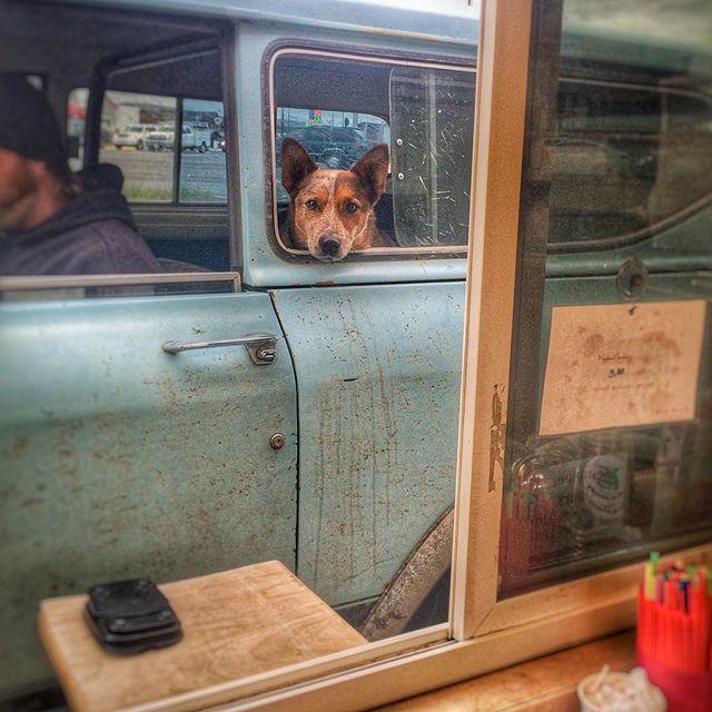 Hey,Bandit! #spro2go #baristalife #dog #bozeman #montana