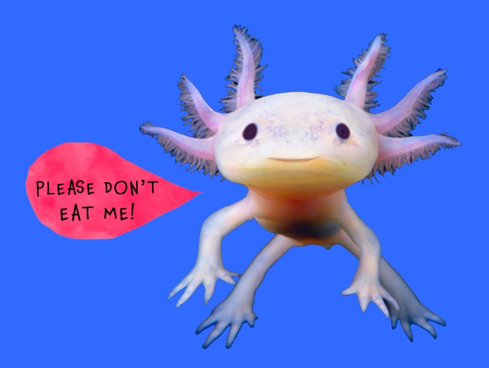 worldwide_buddies_axolotl_no_eating.jpeg