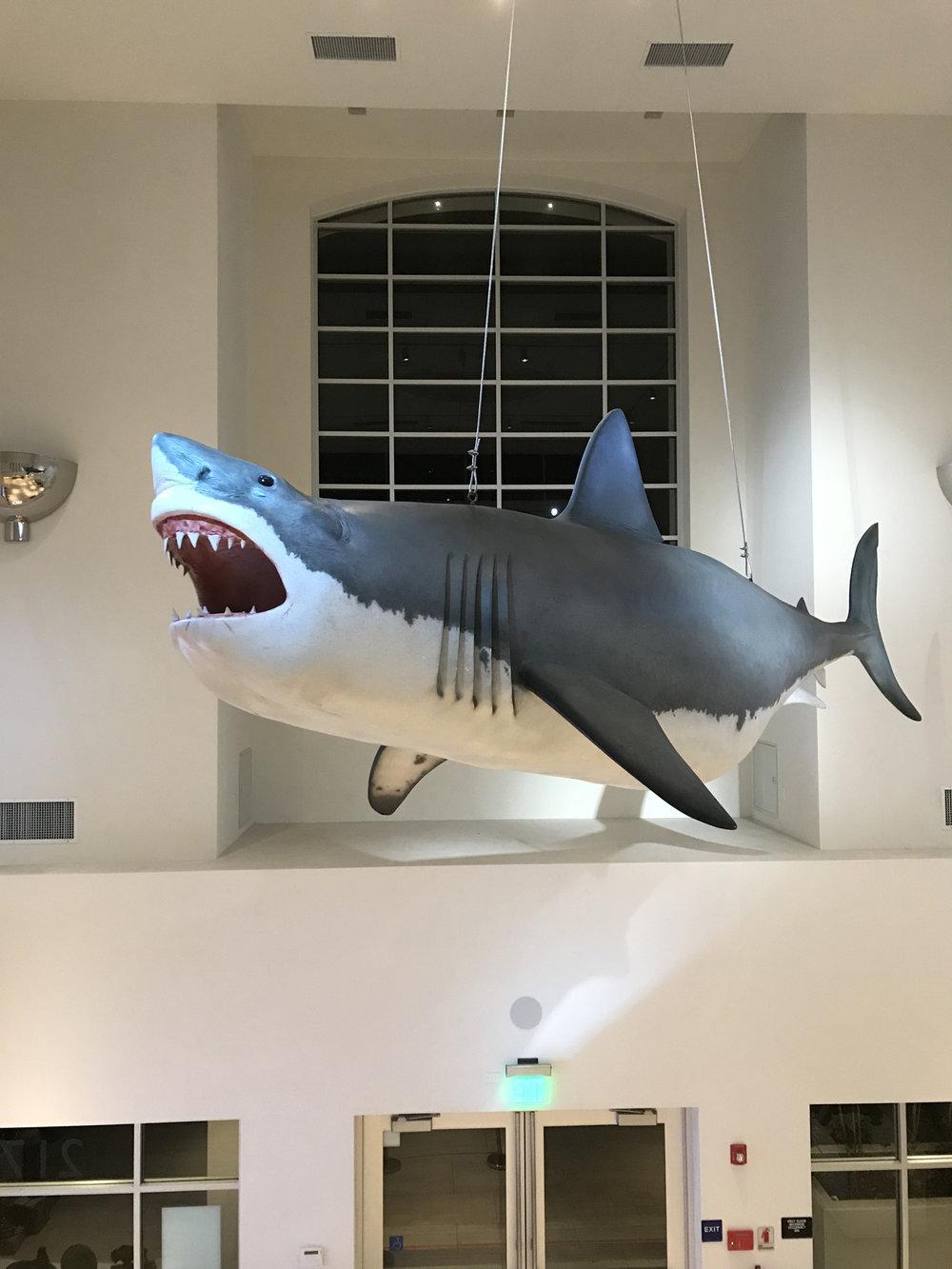 CIM-Great White Shark in lobby.jpg