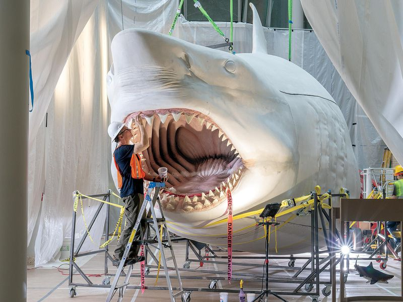 Massive Megalodon model is Meg-nificent — The Daily JAWS