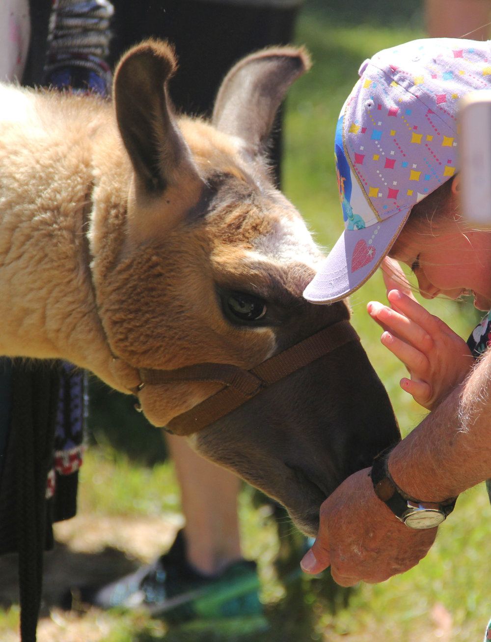 Sponsor a Llama - We need your help! Make a donation to support the work of Llamas of Circle Home. By donating you will help us to take care of our llamas to keep sharing their medicine with other people.