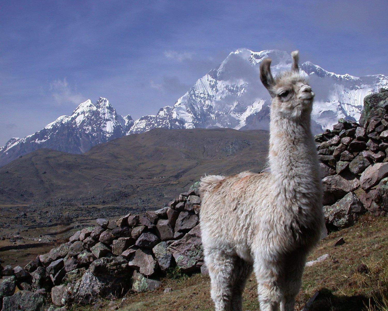 Blog — Llamas of Circle Home