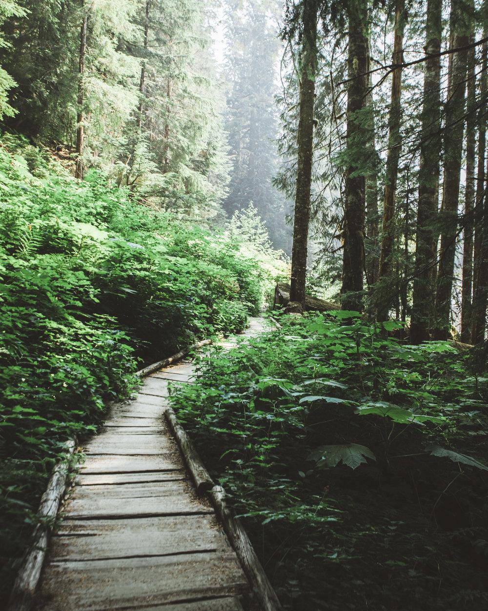 wooded trails.jpg