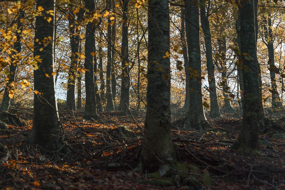 Yuriy Ogarkov Blog Montseny Forest-002.JPG