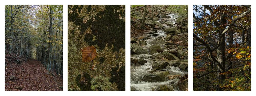 Yuriy Ogarkov Blog Montseny Forest-006-Collage.jpg