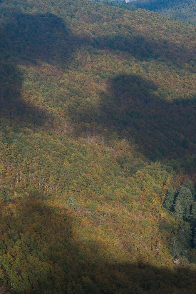 Yuriy Ogarkov Blog Montseny Forest-016.JPG