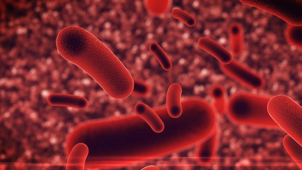 Bakterier.jpg
