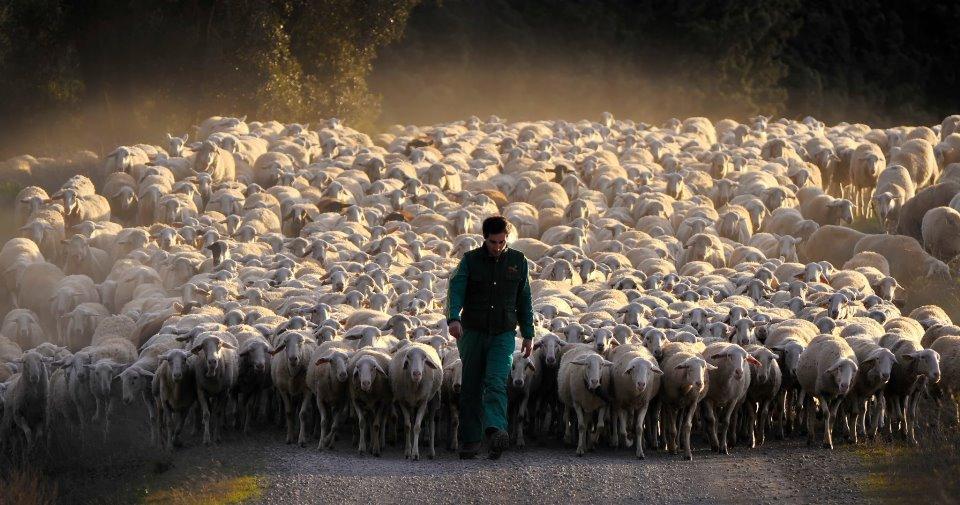pastor ovejas.jpg