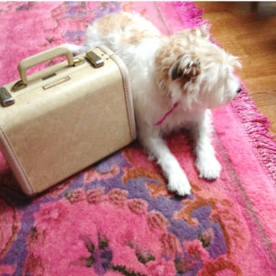 - Обновленный ковер нравится не только самой Анджеле, но и ее собаке Дафне.Если вы решите сделать что-то подобное или уже перекрасили свой старый ковер, напишите мне - пусть остальные полюбуются!