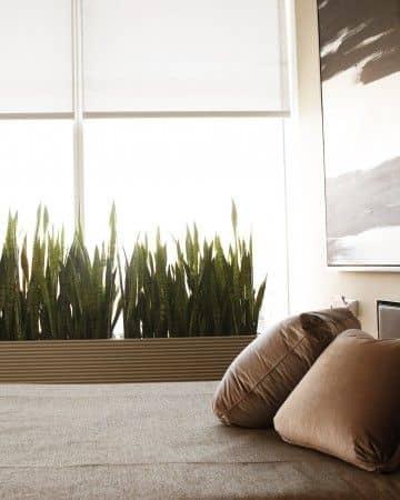 зонирование с помощью комнатных растений