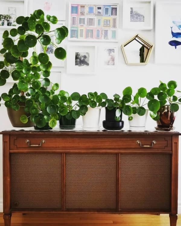 самые модные растения пинтереста