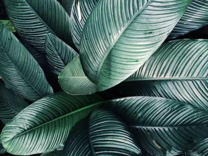 самые модные комнатные растения